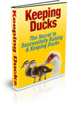 Product picture How To Keeping Duck with PLR